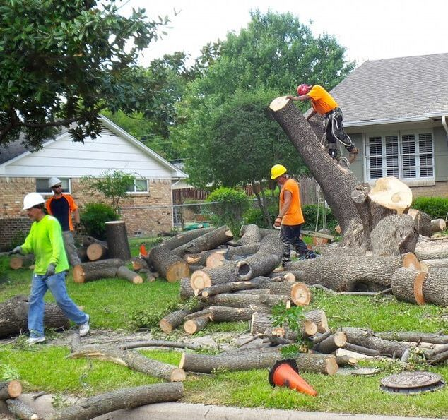 A crew of tree care workers removing a large birch tree from the front yard of a home in a suburban neighborhood.